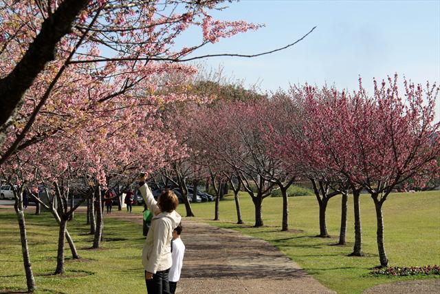 Cerejeiras-do-Japão no Jardim Botânico. Curitiba, 07/07/2011 Foto: Valdecir Galor/SMCS