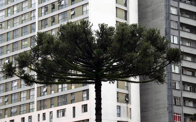 Ao longo do processo de revisão do Plano Diretor, o Instituto de Pesquisa e Planejamento Urbano de Curitiba (Ippuc) verificou a necessidade de identificar quais elementos da paisagem urbana são significativos para as pessoas. Foto: Lucilia Guimarães
