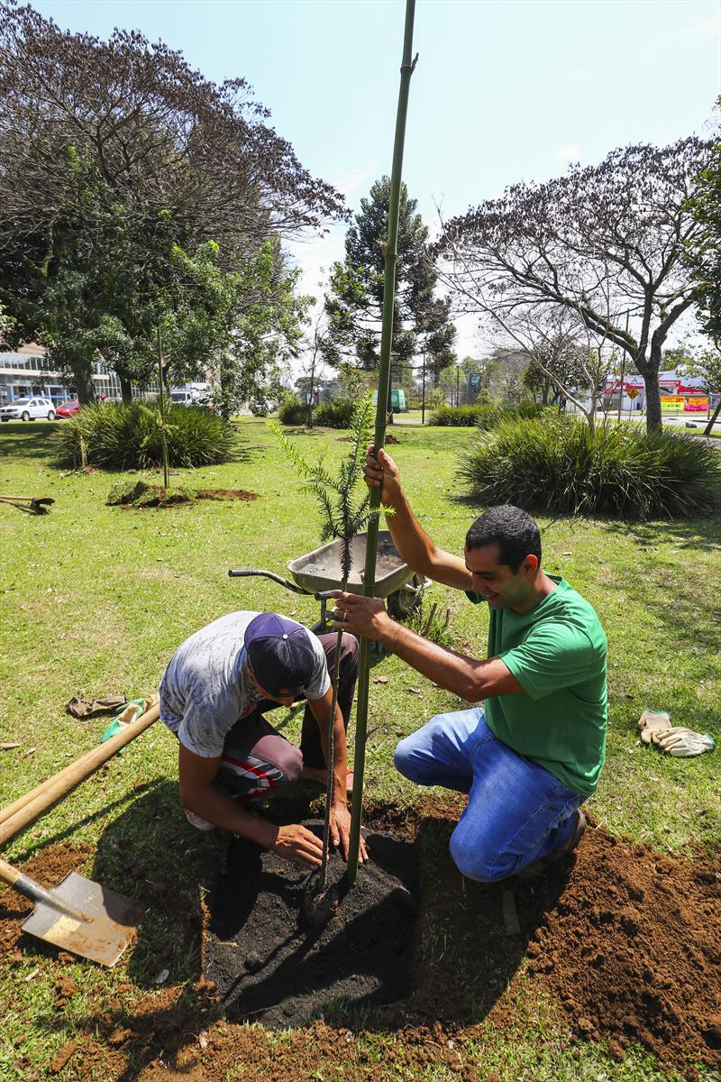 Eixo de Animação Arthur Bernardes ganha 60 mudas de araucárias. Curitiba, 26/09/2018.  Foto: Daniel Castellano/SMCS