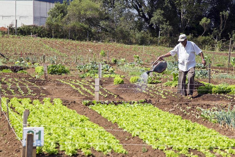 Hortas urbanas crescem e promovem segurança alimentar à população.  - Na imagem, Horta Urbana do Rio Bonito. Foto: Valdecir Galor/SMCS