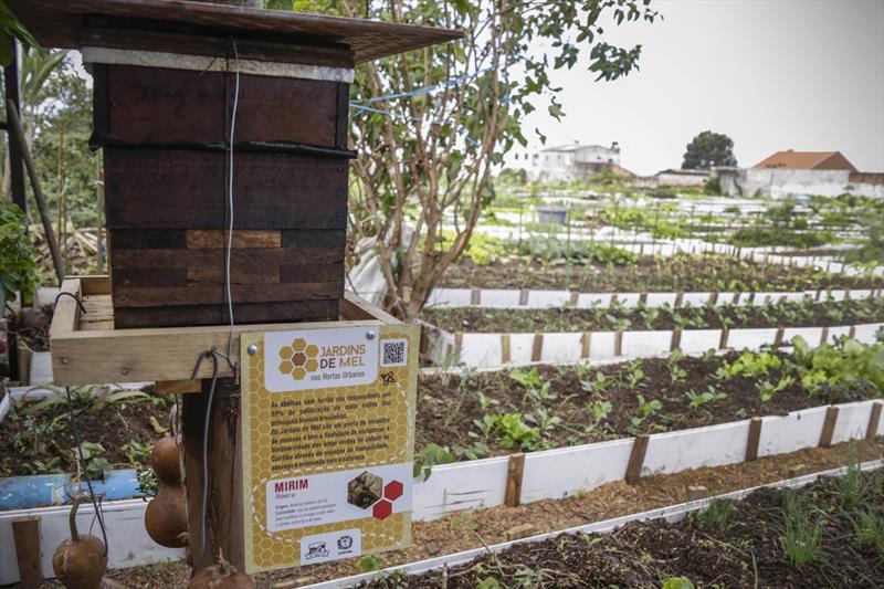 Os Jardins de Mel estão ns hortas comunitárias, uma parceria entre SMAB e a SMME que está levando caixas de abelhas para cultivo. Foto: Luiz Costa /SMCS