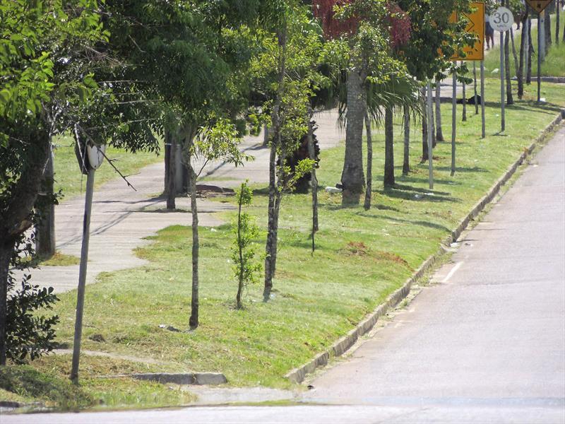 Roçada na rua Odir Gomes da Rocha. Tatuquara. Curitiba, 08/02/2019 Foto: Valdecir Galor/SMCS