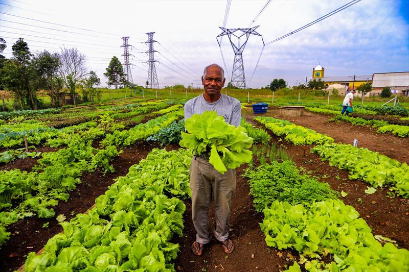 Agricultores urbanos da horta comunitária Monteiro Lobato no Tatuquara realizam sua primeira colheita de verduras e hortaliças. Na imagem aposentado Benedito Fermino Pereira, 75 anos, é um dos 36 produtos da nova Horta Comunitária Monteiro Lobato, no Tatuquara  - Curitiba, 13/05/2019 - Foto: Daniel Castellano / SMCS