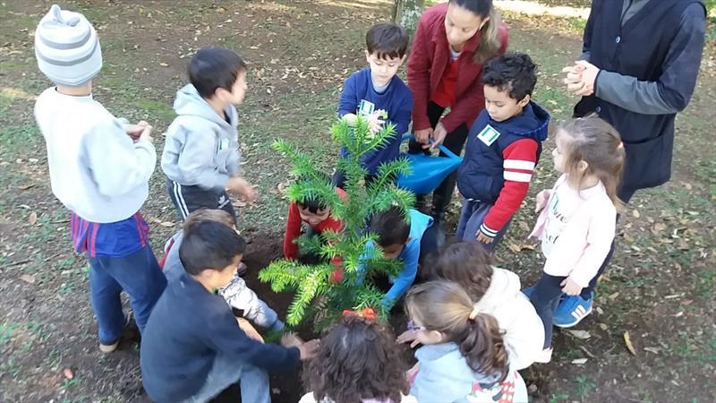 O Dia Nacional da Araucária, comemorado nesta segunda-feira (24/6), foi marcado pelo plantio de 200 novas mudas da árvore em Curitiba.  Foto: Divulgação