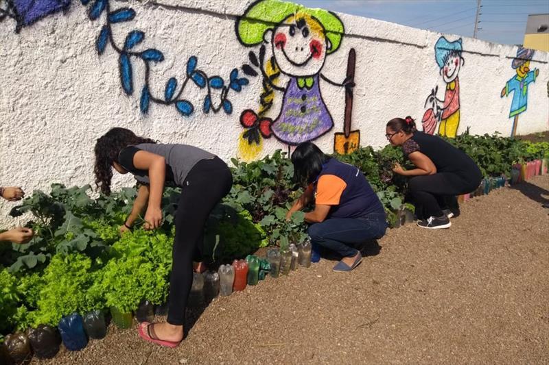 Pais e estudantes cultivam horta na Escola Municipal Mansur Guérios. Foto: Divulgação