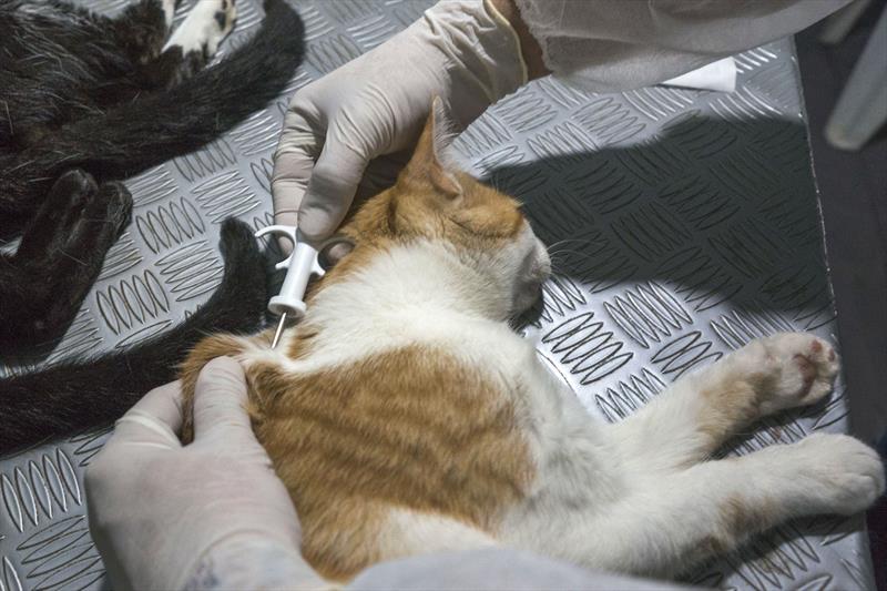 A Rede de Proteção Animal da Prefeitura de Curitiba prorrogou em uma semana a campanha do Programa de Castração Gratuita na Regional Cajuru. Foto: Valdecir Galor/SMCS
