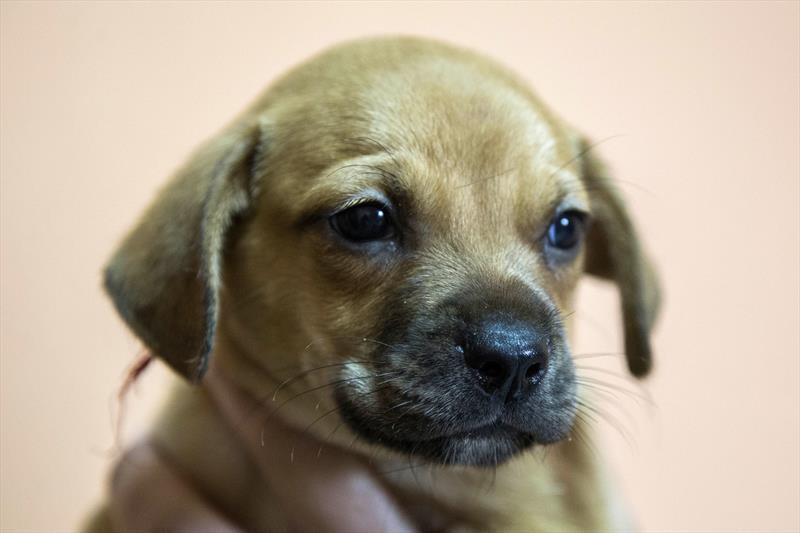 Rede de Proteção abre inscrição de cães para evento de adoção. Foto: Valdecir Galor/SMCS