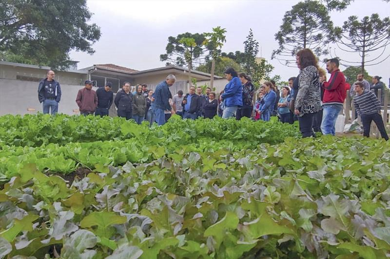 As primeiras hortaliças da Fazenda Urbana, no Cajuru, foram colhidas por servidores da Secretaria Municipal de Segurança Alimentar e Nutricional. Curitiba, 13/09/2019.  Foto: Divulgação