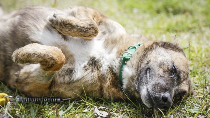 No próximo dia 17, o Centro de Referência para Animais em Risco, irá receber crianças para conhecer os animais resgatados. Foto: Pedro Ribas/SMCS