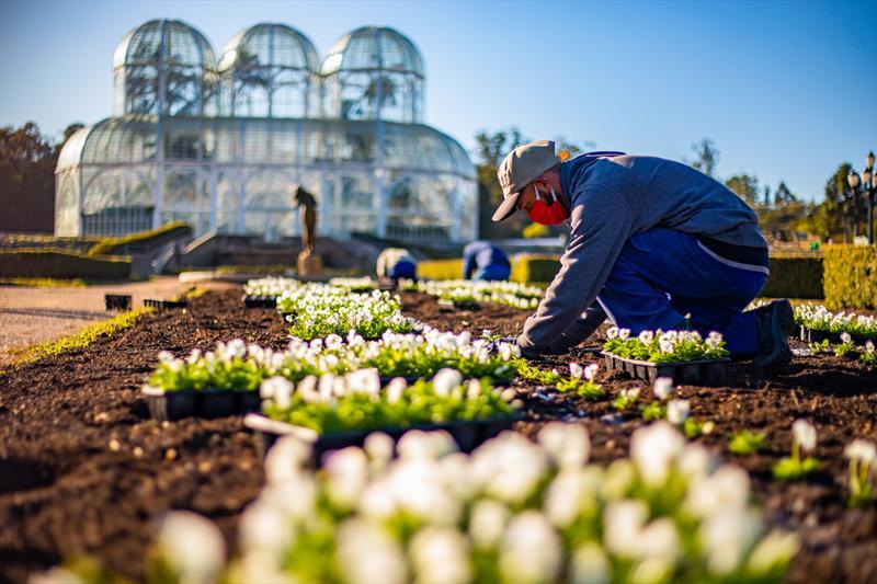 Funcionarios plantam flores preparadas para o inverno nos canteiros do Jardim Botânico - Curitiba, 27/05/2020 - Foto: Daniel Castellano / SMCS