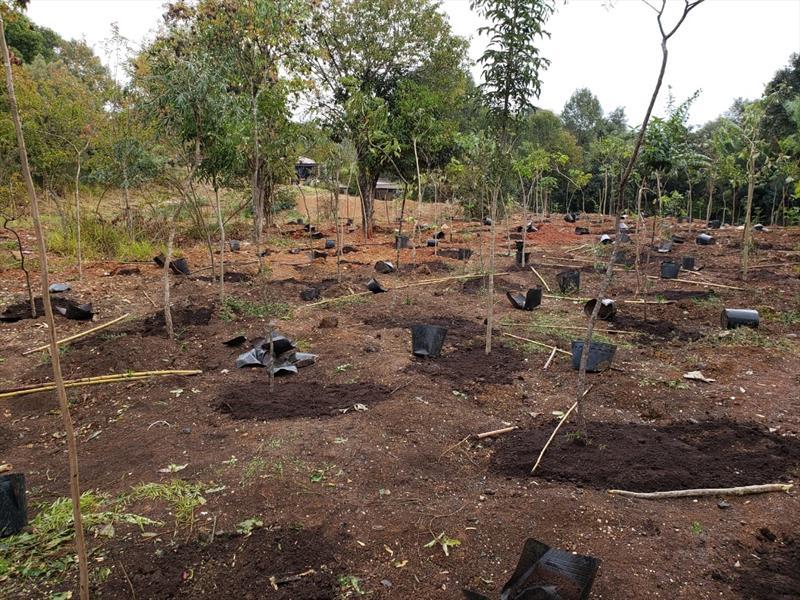 Plantio de mil mudas nativas recupera área de preservação que havia sido degradada. Foto: Divulgação
