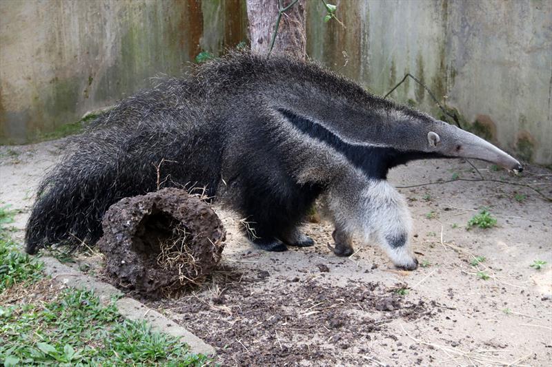 Zoo de Curitiba