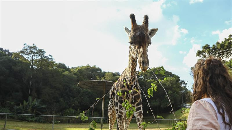 Zoo de Curitiba reabre para visitas a pé na próxima terça. Foto: Daniel Castellano/SMCS (arquivo)