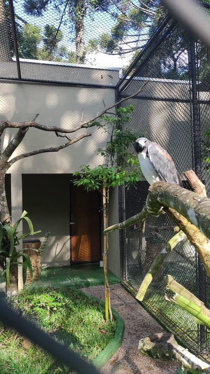 Zoo de Curitiba reabre para visitas a pé na próxima terça. Foto: Divulgação