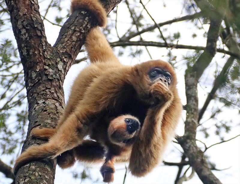 Zoo de Curitiba reabre para visitas a pé na próxima terça.  Foto: Lucilia Guimarães/SMCS
