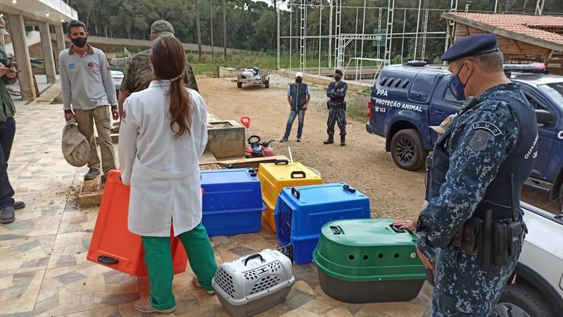 Ação conjunta apreende animais silvestres no Caximba. Foto: Divulgação