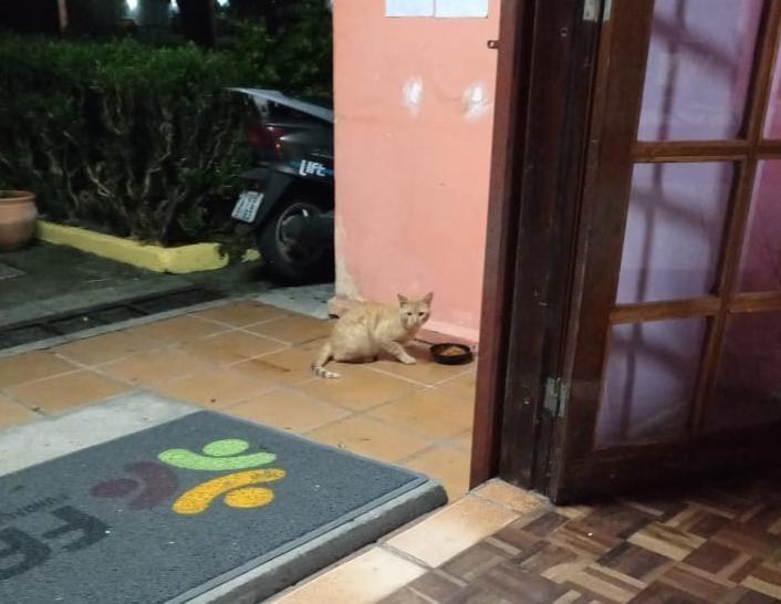 Pessoas em situação de rua e animais de estimação são acolhidos pelo município. Foto: Divulgação