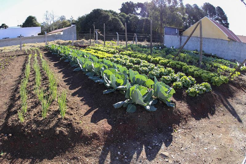 Antigo depósito de resíduos dá lugar a horta em conjunto da Cohab. Foto: Rafael Silva
