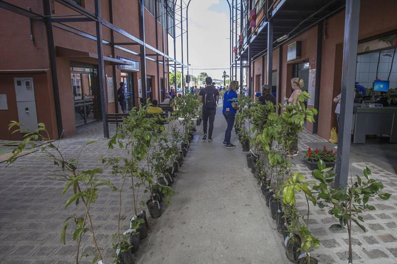 Meio Ambiente distribui mudas gratuitas de árvores nas regionais. Curitiba, 22/10/2021.Foto: Ricardo Marajó/SMCS
