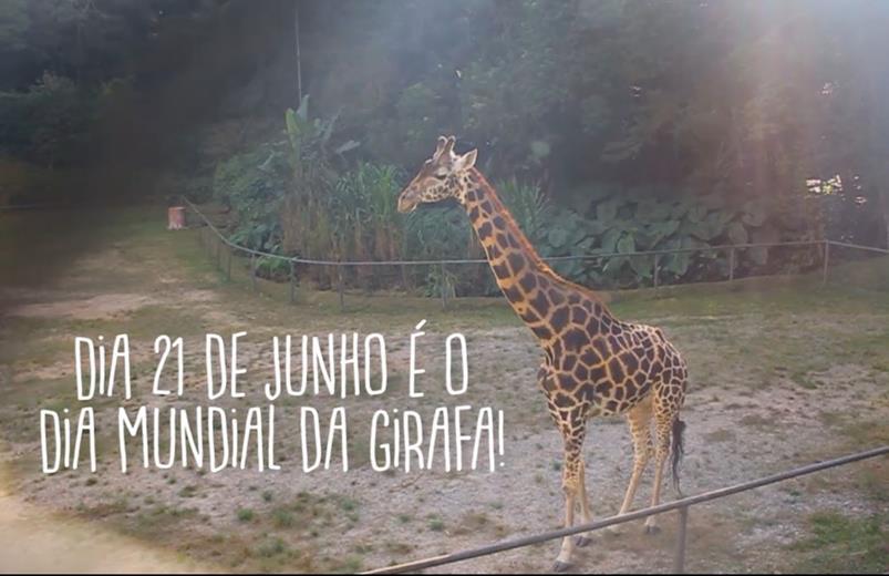 Dia 21 de Junho é o Dia Mundial da Girafa