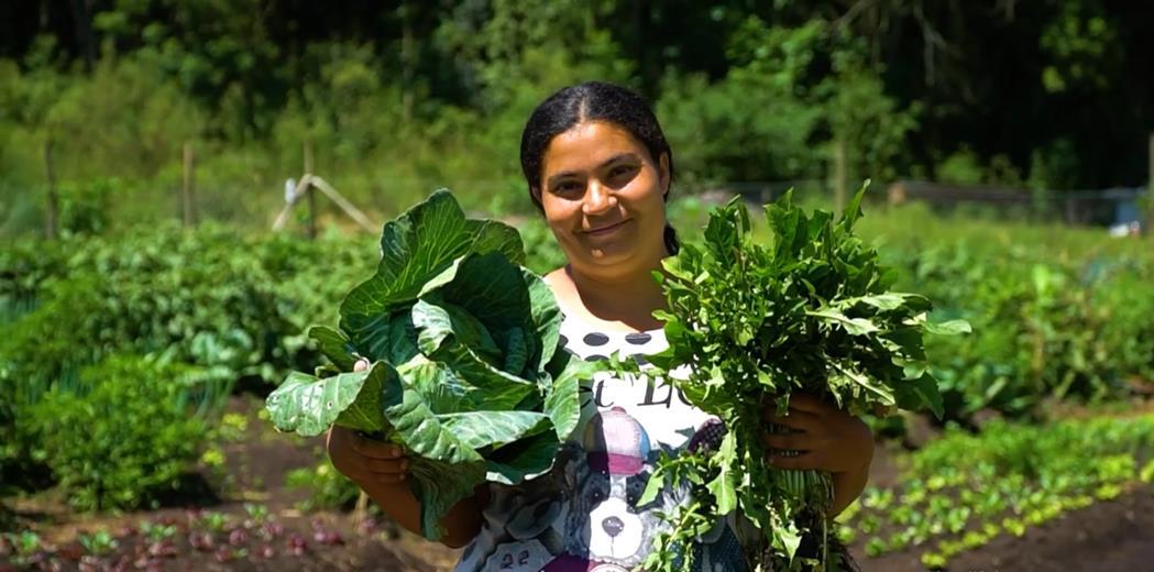 Agricultores urbanos da Horta da Caximba começam a colheita